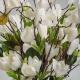 Exclusive magnolia LENKA