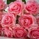 Umělá růže Růžena růžová. Cena uvedena za 1 kus.