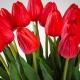 Umelý tulipán BEATA červený. Cena uvedená za 1 kus.
