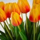 Umelý tulipán BEATA oranžový. Cena uvedená za 1 kus.