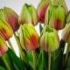 Umelý tulipán BEATA červeno-zelený. Cena uvedená za 1 kus.
