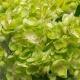 Umelá hortenzia HANA zelená. Cena uvedená za 1 kus.