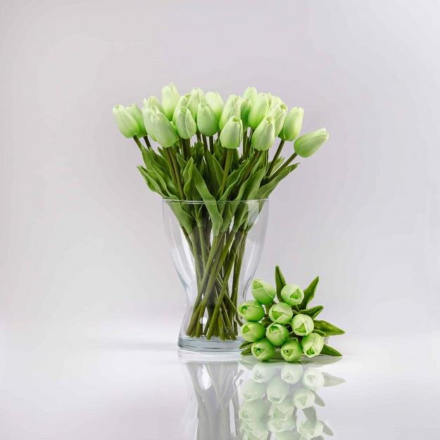 Adorable tulip IVONA