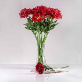 Pünközsdi rózsa